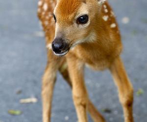 animal, deer, and baby image