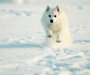 poofy, white, and winter image