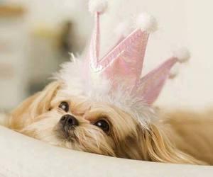 cute dog animals image