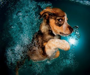 dog, water, and puppy image