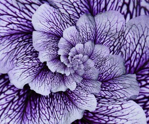 flower, nature, and purple image