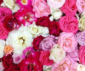 colours, flowers, and roses image
