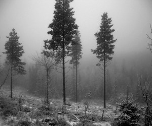 black and white, forest, and trees image
