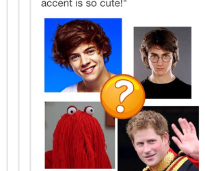 funny, tumblr, and harry image