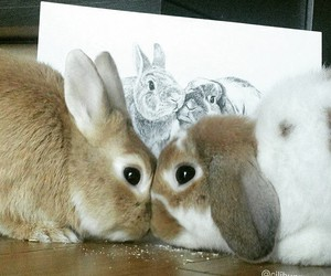 cute animals and rabbit image