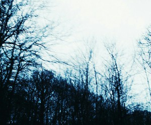 grunge and trees image