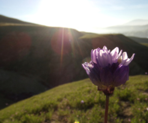 flower, hill, and morning image