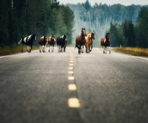 forest, horses, and road image