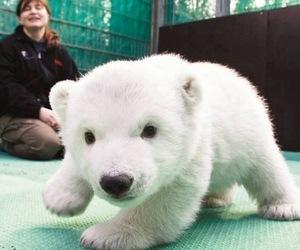 cute, Polar Bear, and bear image