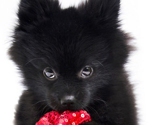 dog and cute animals image