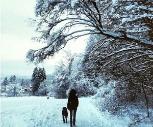 dog, journey, and life image