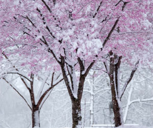 snow, winter, and pink image