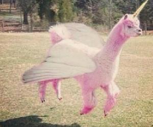 pink, unicorn, and lama image