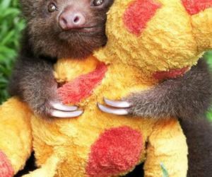 sloth, cute, and animal image