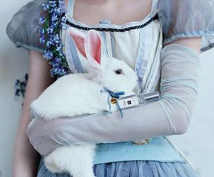 alice, rabbit, and blue image