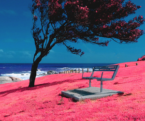 pink, nature, and sea image