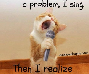 funny, cat, and problem image