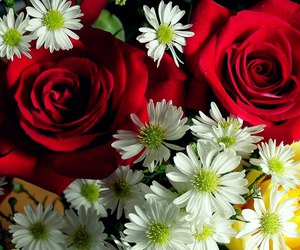 rose, flowers, and daisy image