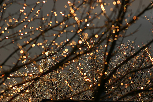 lights, trees, and cute image