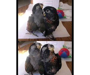 funny, bird, and carl image