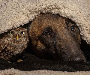 dog, owl, and animals image