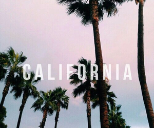 california, palm tree, and outdoors image