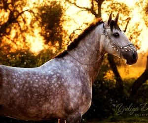 beauty, forest, and horses image