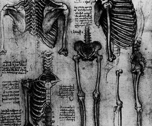 anatomy, b&w, and biology image