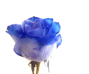 blu, blue, and rose image