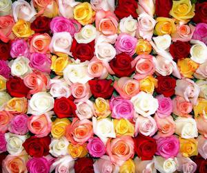 rose and flower image
