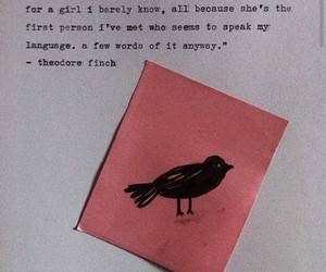 book, all the bright places, and jennifer niven image