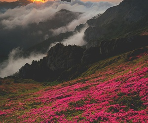 flowers, nature, and beautiful image