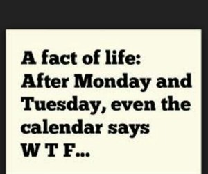 fact, life, and wtf image