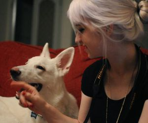 dog, charlavail, and cute image