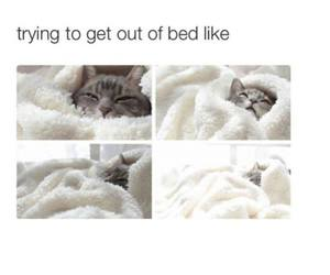 cat, bed, and funny image
