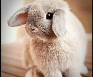 bunny, pet, and rabbit image