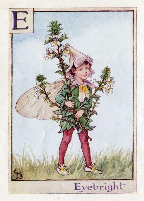 fairy, eyebright, and flower fairies image