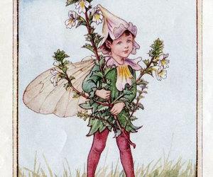 fairy, flower fairies, and eyebright image