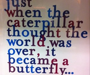 life, butterfly, and caterpillar image