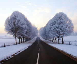 winter, snow, and tree image