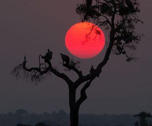 sun, moon, and sunset image