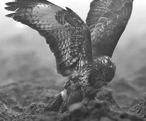 bird, animal, and eagle image
