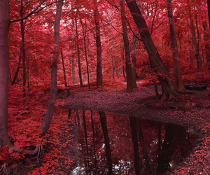 red morning image