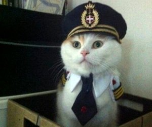cat, funny, and captain image