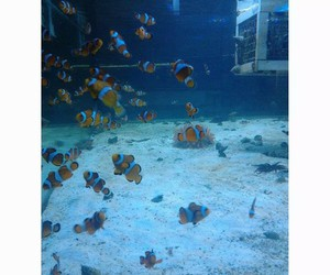 fishes, water, and nemo image