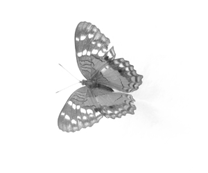 black, buterfly, and butterfly image