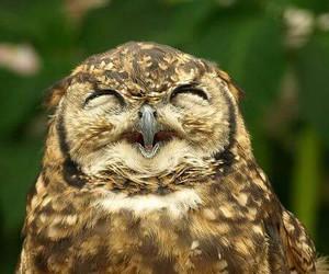 owl, animal, and smile image