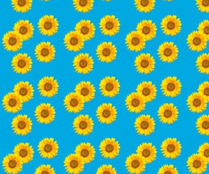 background, cool, and sunflowers image