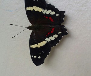 beauty, butterfly, and dark image