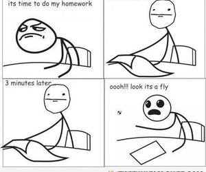funny, homework, and fly image